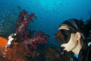 Plongée à Raja Ampat. Papouasie, Indonésie, mars 2012.
