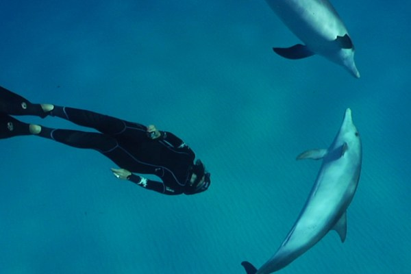 © Dolphin Embassy