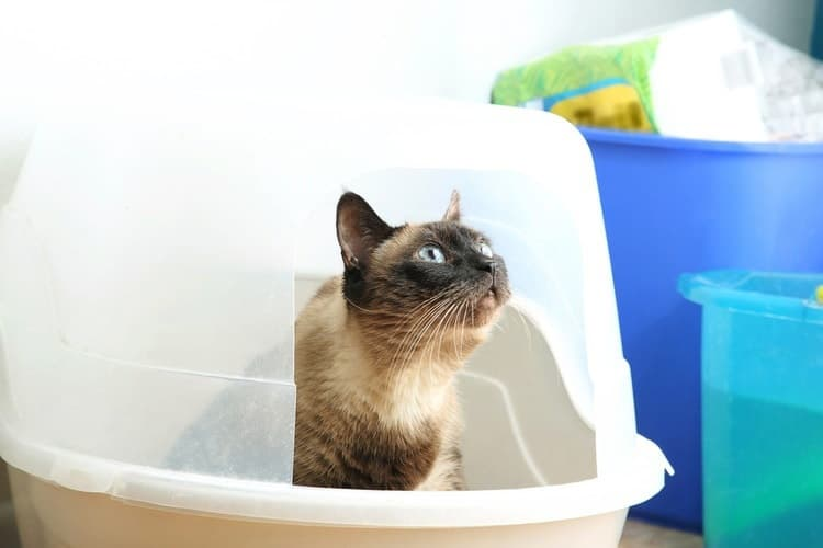 The 25 Best Cat Litter Boxes of 2019 - Pet Life Today