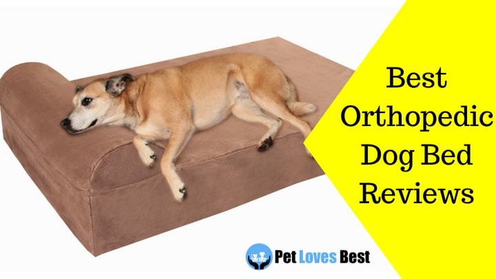 Best Orthopedic Dog Bed Reviews - Aid Your Dog\u0027s Sleep - Pet Loves Best