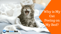 Why is My Cat Peeing on My Bed? - All You Need to Know!