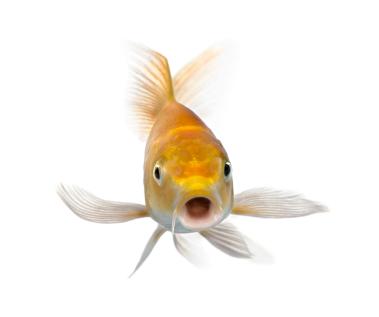 Pet fish names list 2017 fish tank maintenance for Names for pet fish