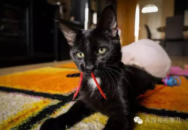 他們把普通貓剃毛當斯芬克斯無毛貓賣,簡直黑心!