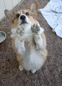 Dog Behaviour Consulting in Golden, Lakewood