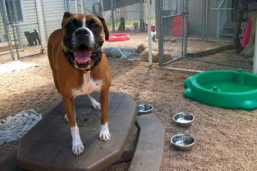 Dog Daycare and Dog Boarding in Denver, Arvada