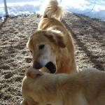 keeping your dogs safe in the spring