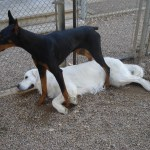 Dog Daycare in Golden Colorado