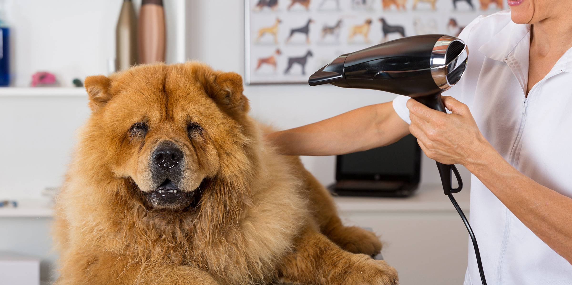Pets Grooming Service For Dogs And Cats