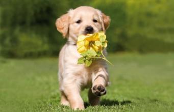 A Cute Puppy Wallpaper Cute Puppy Running Spring Dog 341x220 Pets Add Life