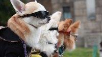 """""""Cool"""" Dog Costumes"""