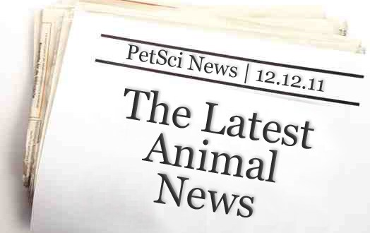 PetSci News: The Latest from the Animal World