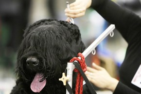 Save on Grooming Costs: Clipping your Dog's Nails and Coat