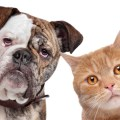 Can cats spread canine parvovirus to dogs