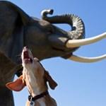 ryder elephant howl
