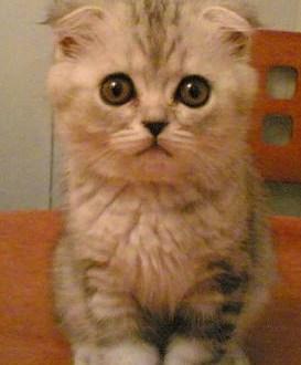 The Facts About Feline Eyesight