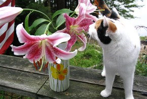 The Truth About Easter Lily Toxicity: Poisonous Plants for Cats
