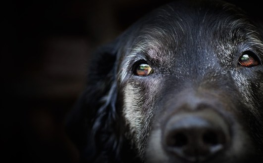 Canine Epilepsy and the Causes of Canine Seizures