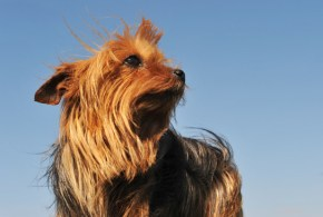 Protein Losing Enteropathy: Intestinal Protein Loss in Dogs