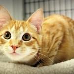cat flu shelter