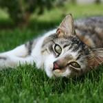 feline panleucopenia