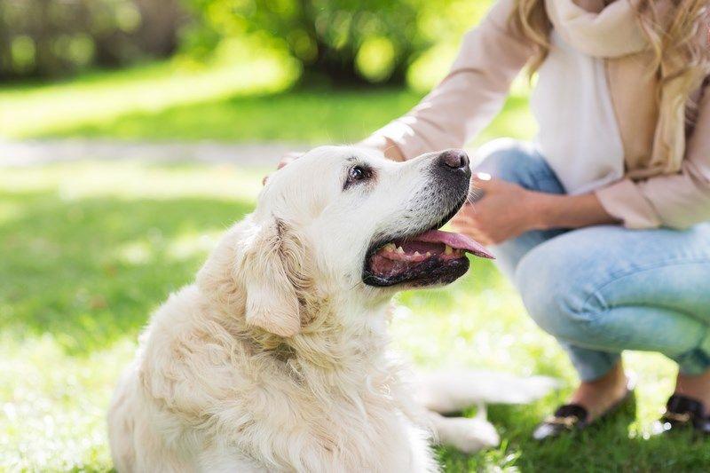 Pet Sitters Ireland Pet Sitter, Dog Walker, Cat Sitter, Dog Minder - pet babysitter
