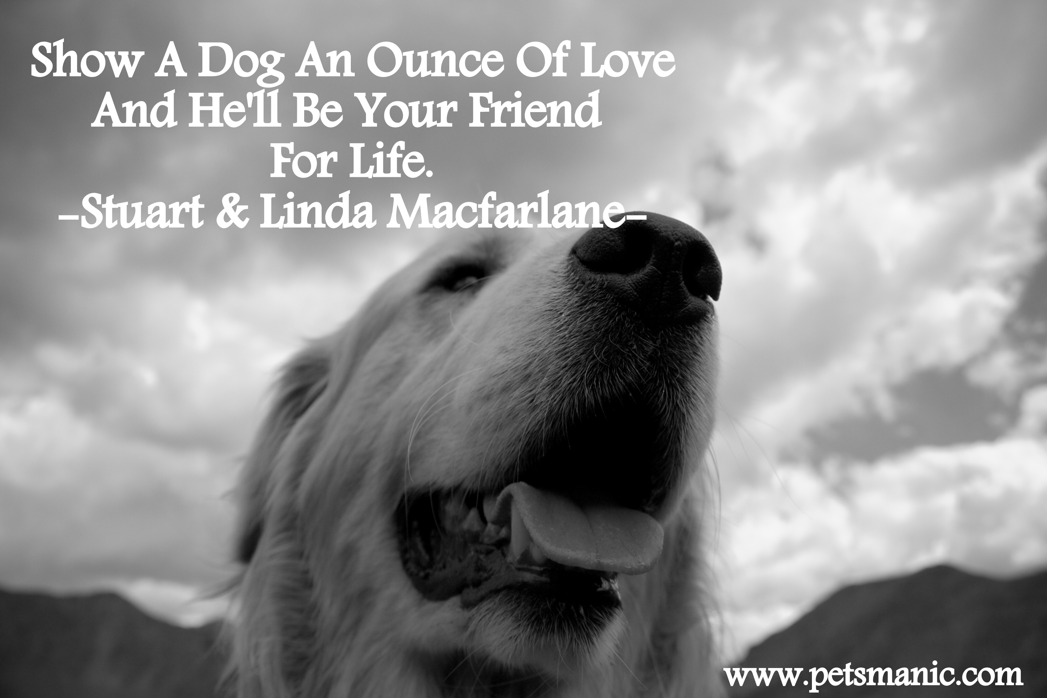 Files Of Philosophical Quotes Wallpapers Dog Quotes Pets Manic Blog