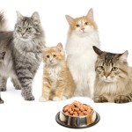 Cat Food, Treats, Toys & Accessories
