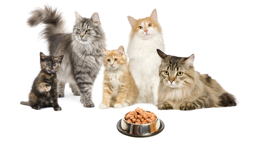 Pet source cat food treats toys accessories solutioingenieria Image collections