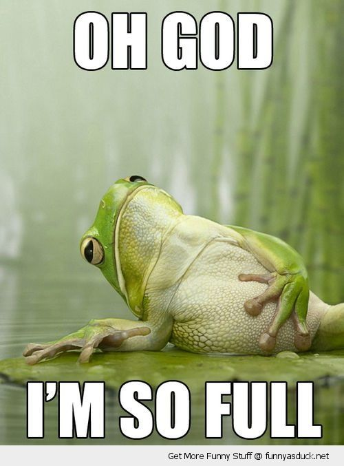 funny frog lying down holding belly god so full pics 5 ways to feel thinner in 3 days pfitblog