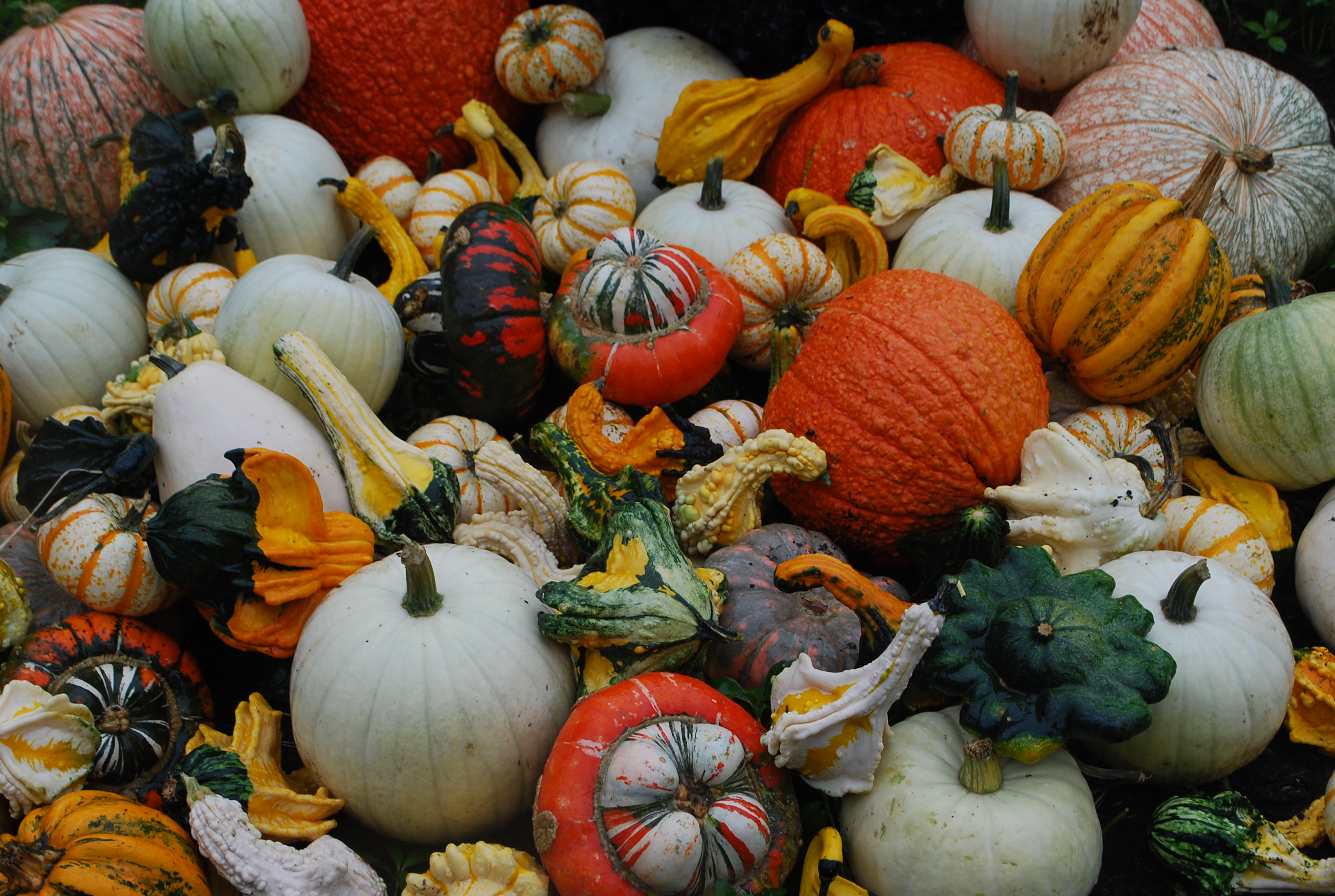 Fall Harvest Wallpaper Android Wallpaper Fall Colors