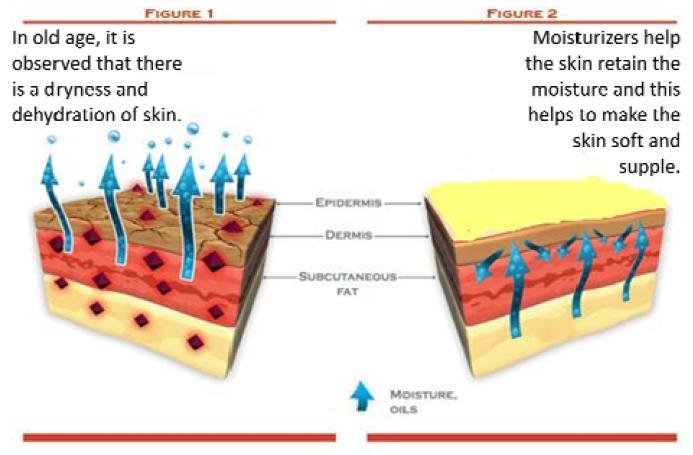 The Ageing Skin - Part 4b - Moisturizers Articles PharmaXChangeinfo