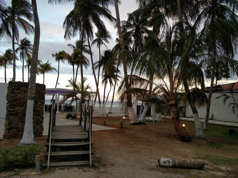 The palm trees of Playa El Yaque relaxing after a few months of relentless wind.