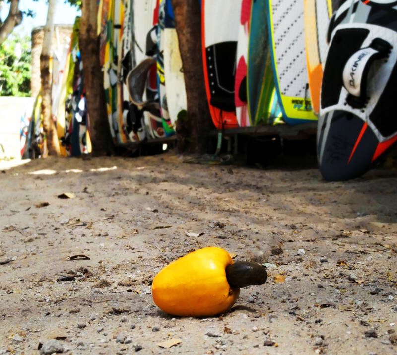 Caju fruit ready to be eaten in the equipment storage at Club Ventos.