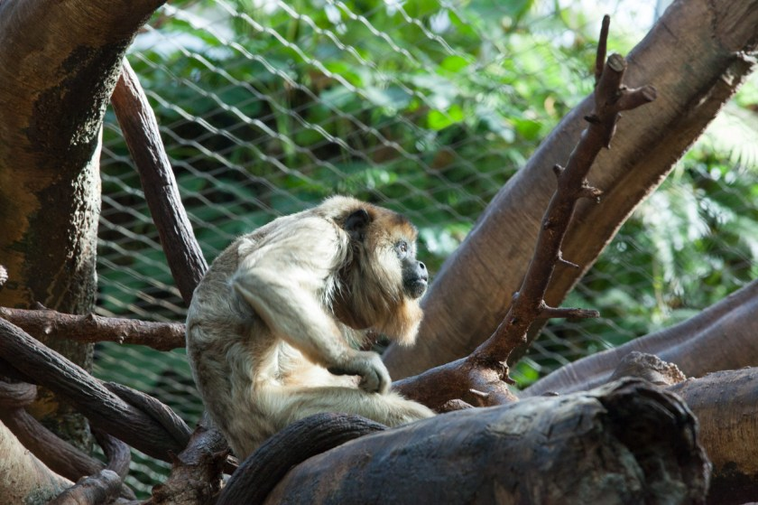 One of the primates