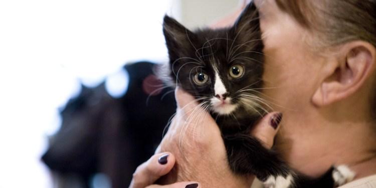 kitten-hold1