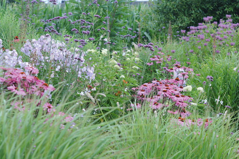 Pin von Elena Ziegler auf Garten Pinterest Pelz, Gräser und - garten mit grasern gestalten