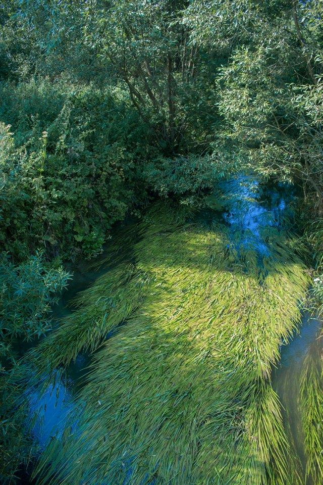 Річка Зубра, що протікає через Раковець