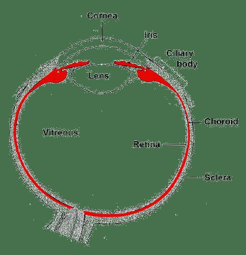2007 chevrolet cobalt cruise wiring diagram