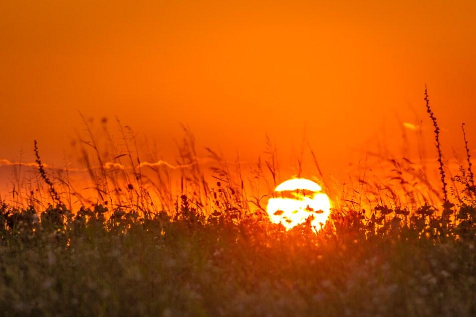 Că tot apune soarele în acest moment... Salut bulina care ne a