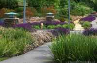 Photobotanic   A Summer-Dry Landscape Subdivision ...