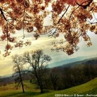Biltmore Estate - My Secret Walk Part 4