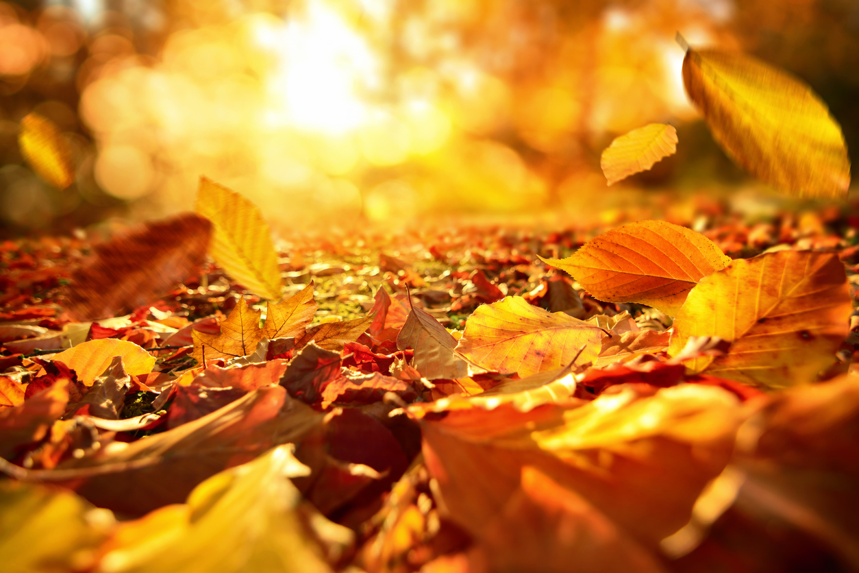 Autumn Leaves Falling Hd Wallpaper 35 Beautiful Fall Photos And Time Lapse Video