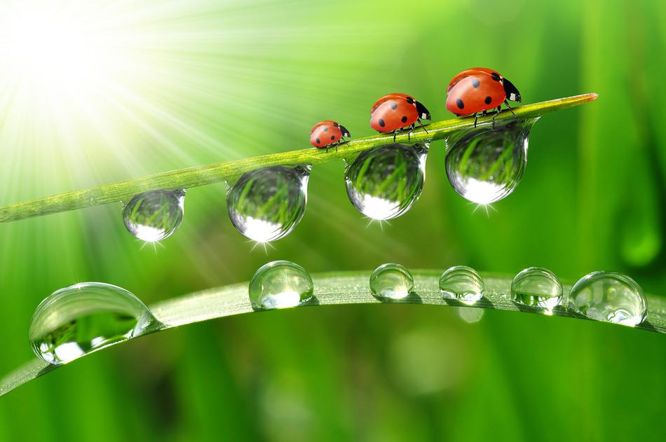 3d Frog Wallpaper Photography Magazine Dewdrops And Ladybugs