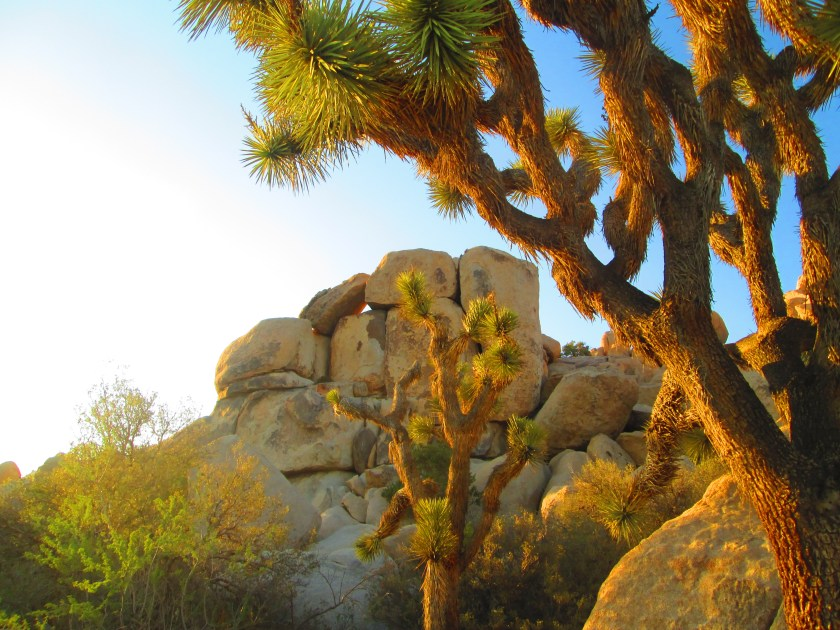 This is my absolute favorite image captured out at Joshua Tree National Park.