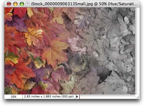 Fading Color PhotoLesa