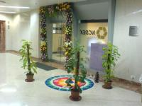 Diwali bay decoration photos