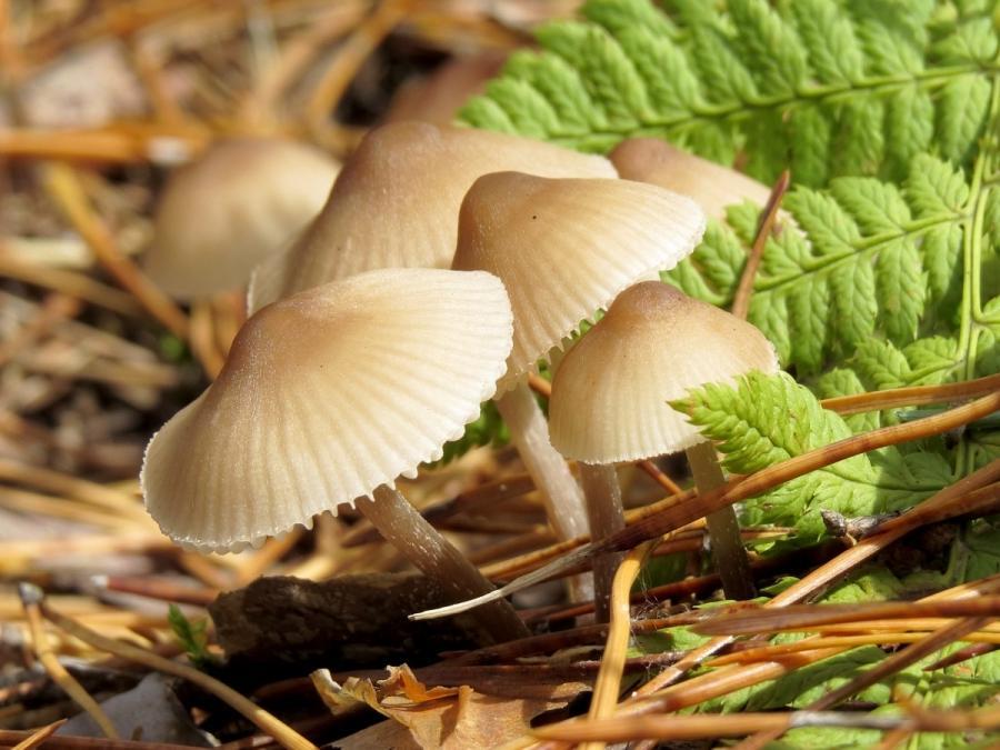 Free Fall Harvest Wallpaper Beautiful Photos Of Mushrooms