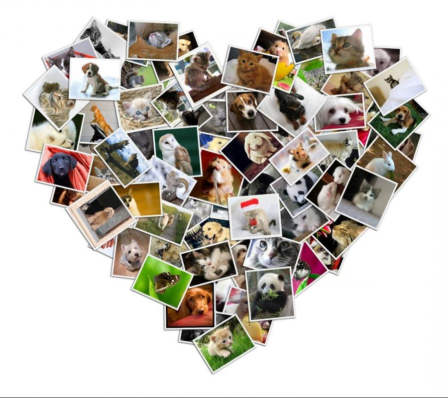 Online Fotocollage Photo Collage Wallpaper Maker