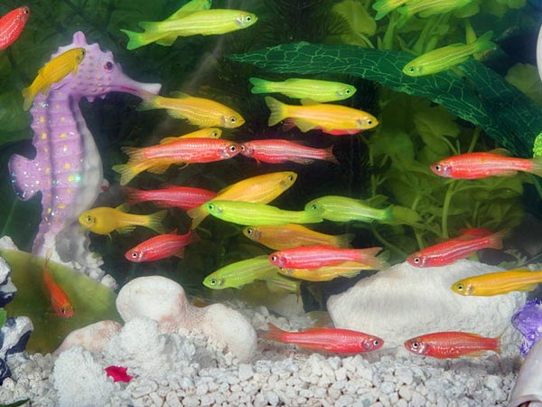 Aquarium fish species fish breeds for your aquarium adds Types of fish aquarium