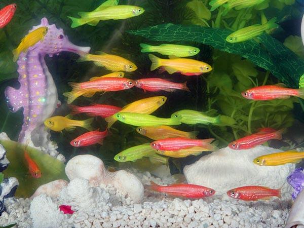 Aquarium Fish Species Fish Breeds For Your Aquarium Adds